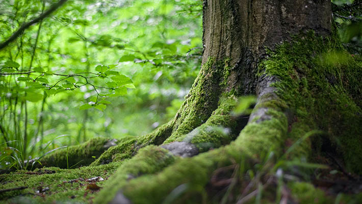 Place Workshop image tree